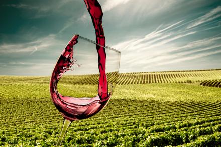 Weinanbau Deutschland