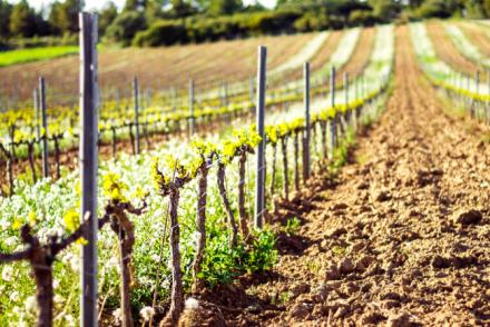 Weinanbaugebiet Saale-Unstrut