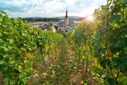 Weinanbau Rheingau